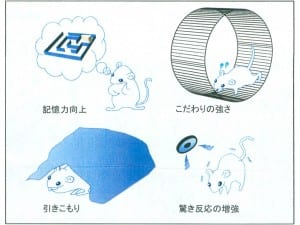 LRFN2欠損マウスの症状(研究報告から)