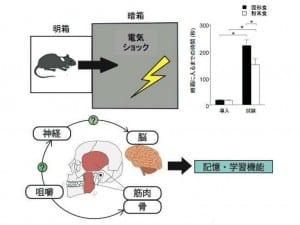 実験の模式図(研究成果資料から)